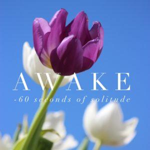 awake meditation