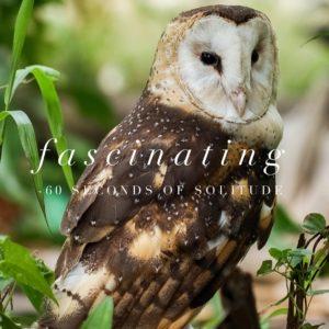 fascinating meditation