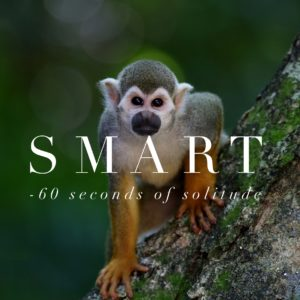 Smart meditation