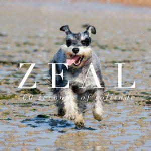 zeal meditation